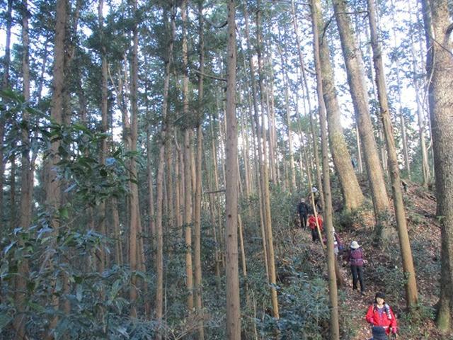 画像9: 岡田ガイドからの便り・戸倉城山ツアーにいってまいりました!