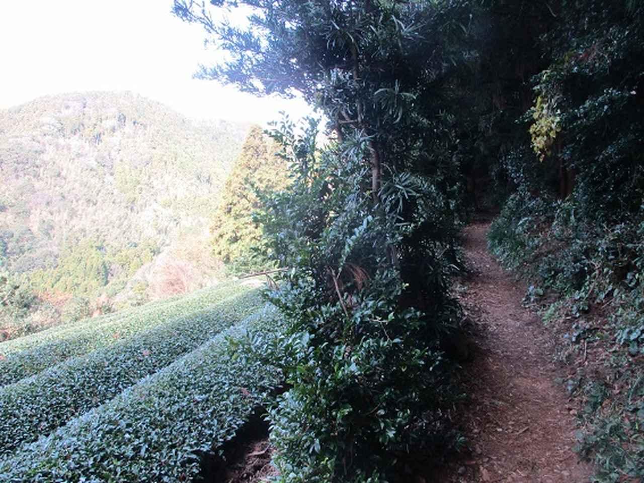 画像4: 岡田ガイドからの便り・満観峰ツアーのご案内