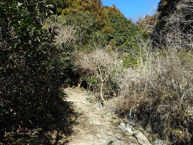 画像3: 岡田ガイドからの便り・満観峰ツアーのご案内