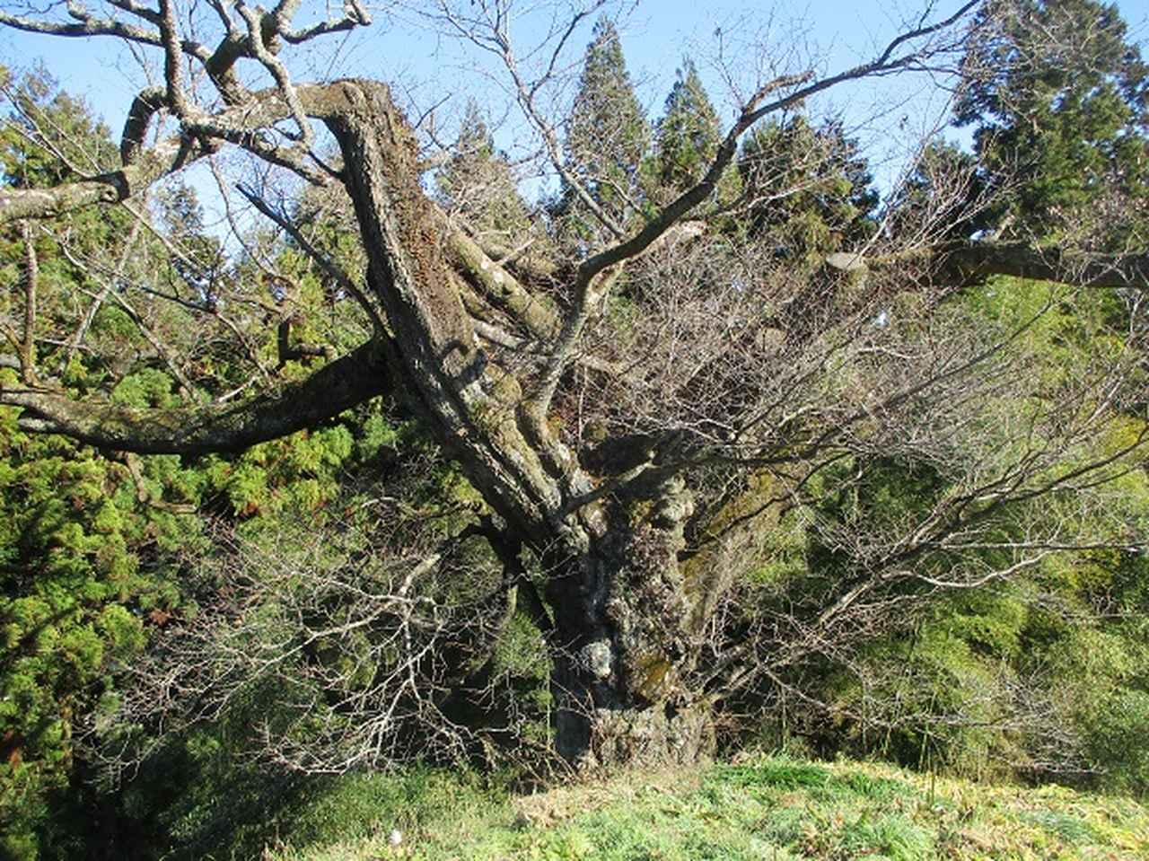 画像6: 岡田ガイドからの便り・戸倉城山ツアーにいってまいりました!