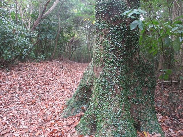 画像10: 静岡県の沼津アルプスを歩いてきました。