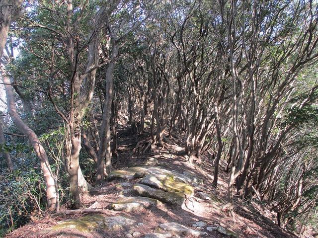 画像16: 静岡県の沼津アルプスを歩いてきました。
