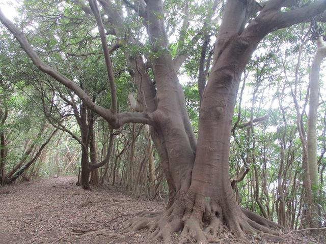 画像11: 静岡県の沼津アルプスを歩いてきました。