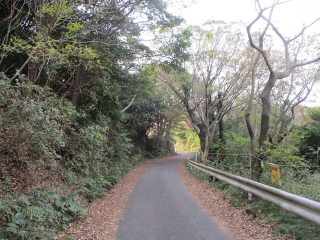 画像5: 静岡県の沼津アルプスを歩いてきました。