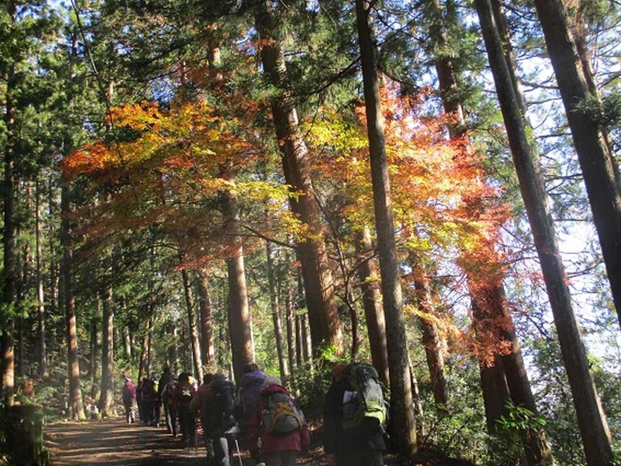 画像4: 先日12月17日に岡田ガイドのコースで山旅会 「身延山」 ツアーにいってまいりました!