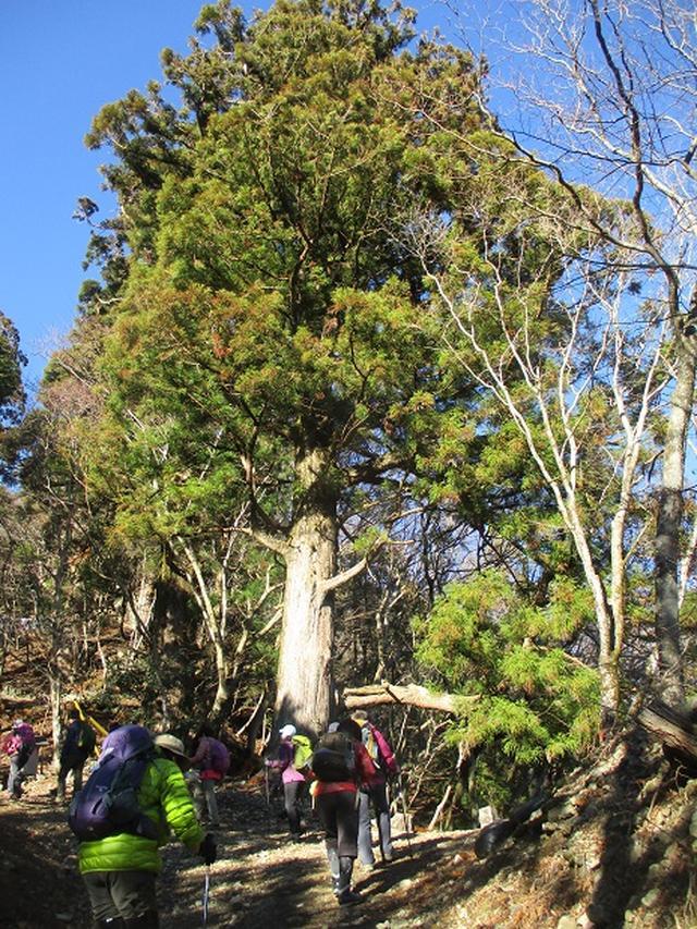 画像1: 12月17日に山旅会 「身延山」 ツアーにいってまいりました!