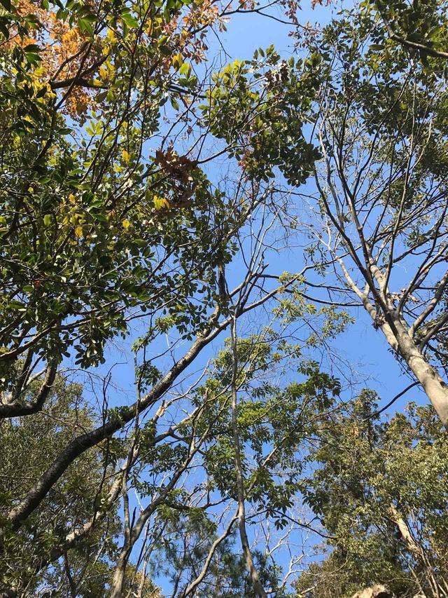画像: 空を見上げたら快晴、木々が揺れて、パラパラと枯葉も落ちてきて、心地良い空気の中のんびり。