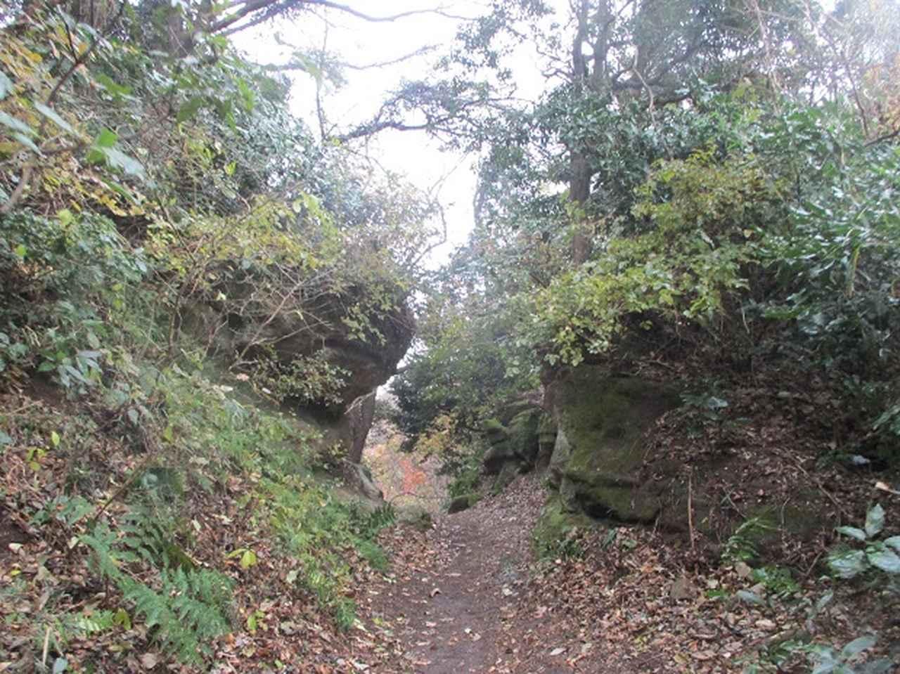 画像7: 先日12月22日に山旅会現地集合 「能見堂緑地から天園」 ツアーにいってまいりました!