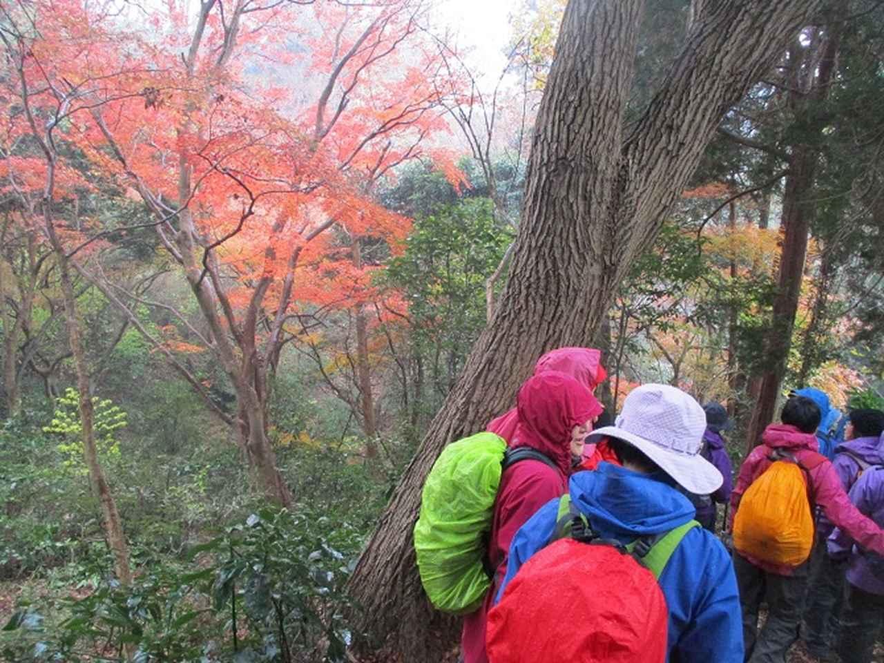 画像10: 先日12月22日に山旅会現地集合 「能見堂緑地から天園」 ツアーにいってまいりました!