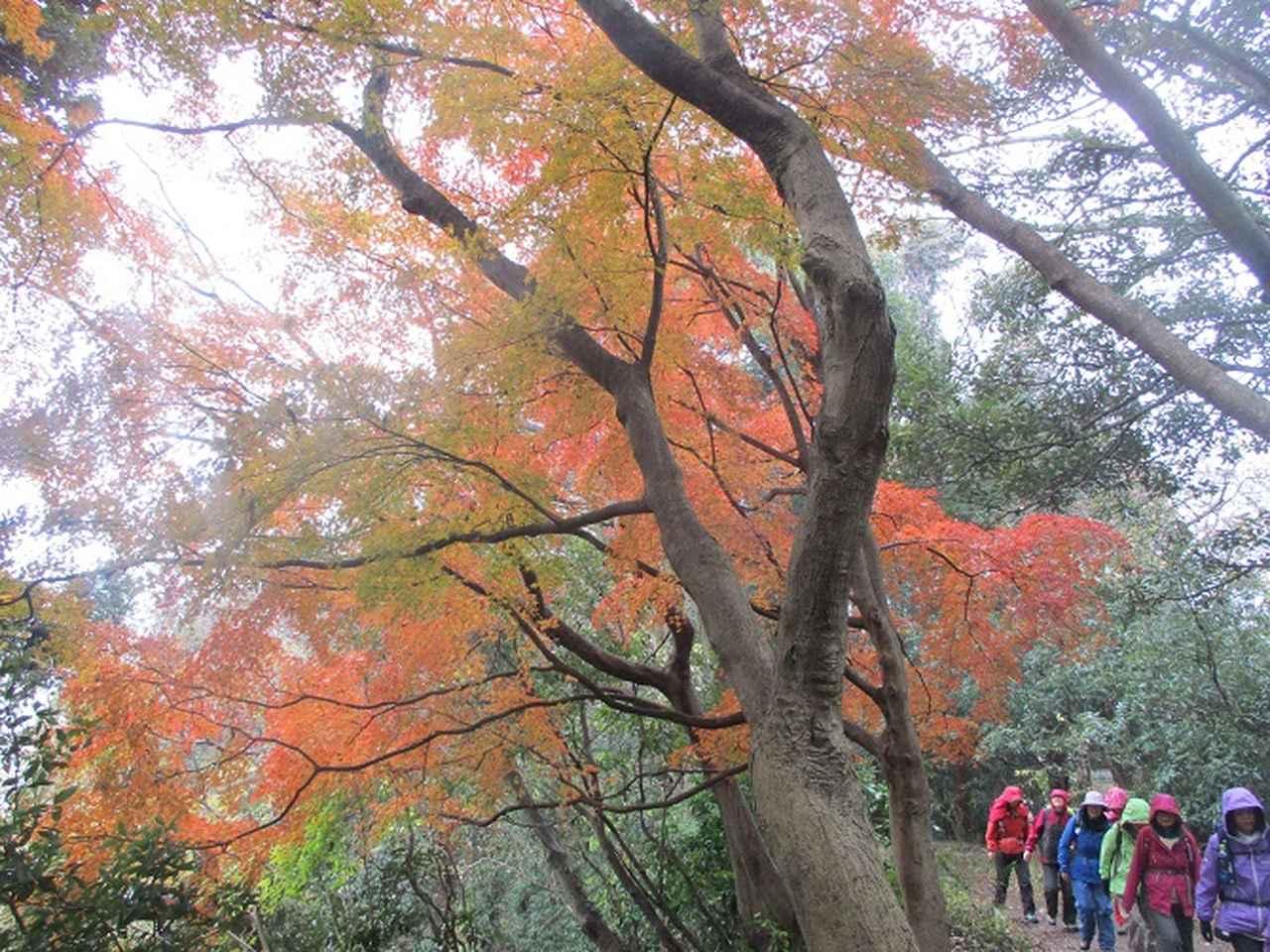 画像5: 先日12月22日に山旅会現地集合 「能見堂緑地から天園」 ツアーにいってまいりました!