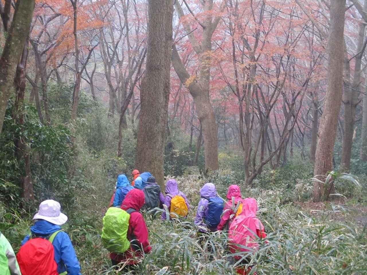画像9: 先日12月22日に山旅会現地集合 「能見堂緑地から天園」 ツアーにいってまいりました!
