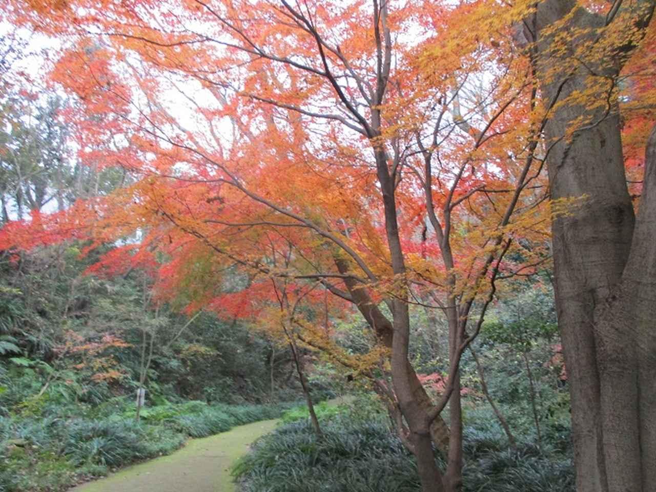 画像3: 先日12月22日に山旅会現地集合 「能見堂緑地から天園」 ツアーにいってまいりました!