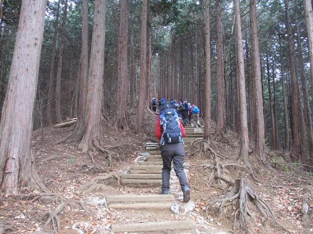 画像4: 【山旅会・登山ガイドこだわりツアー】岡田ガイドからの便り・石老山ツアーにいってまいりました!