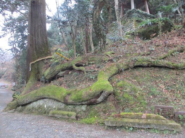 画像8: 【山旅会・登山ガイドこだわりツアー】岡田ガイドからの便り・石老山ツアーにいってまいりました!