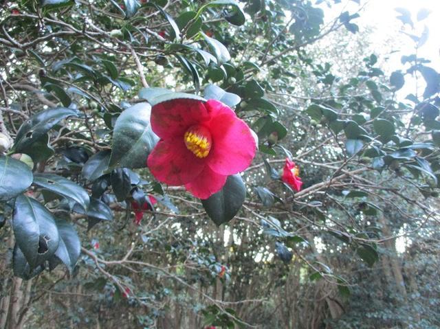 画像7: 1月の山旅会 「宮島弥山・秋吉台龍護峰・萩笠山」 の下見にいってまいりました!