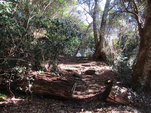 画像13: 1月の山旅会 「宮島弥山・秋吉台龍護峰・萩笠山」 の下見にいってまいりました!