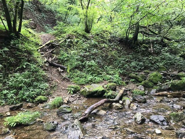 画像: 【御岳山・ロックガーデン】緑の匂いと水のせせらぎが今でも蘇ってきます