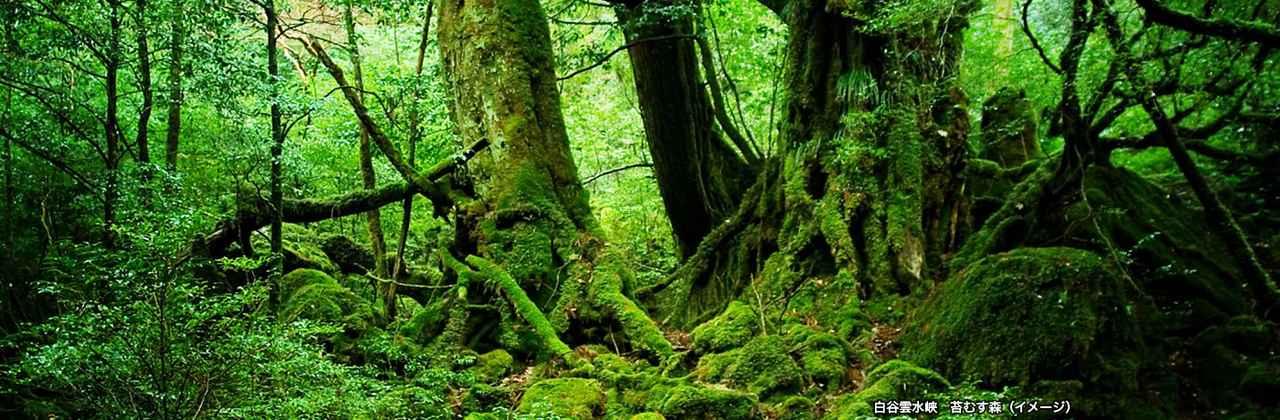 画像: 縄文杉トレッキング 世界自然遺産 屋久島ツアー特集