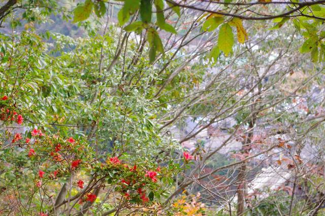 画像: 紅葉や緑の葉の中に、紅いお花が映えます