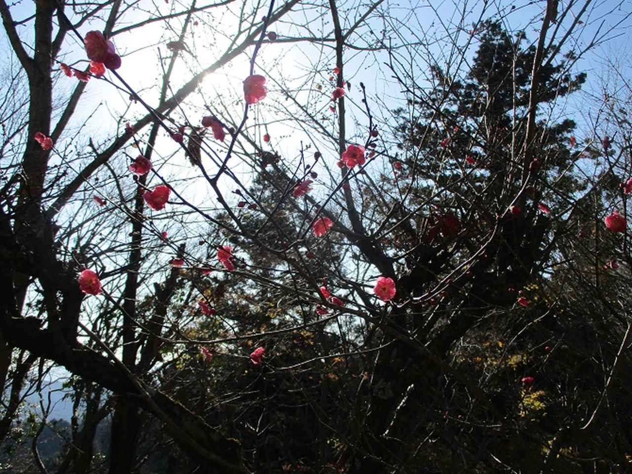 画像6: 先日12月21日に岡田ガイドのコースで 「高尾山」 へ行ってきました!