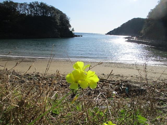 画像7: 12月27日に岡田ガイドのコースで山旅会ハイキング 「須崎遊歩道」 にいってまいりました!