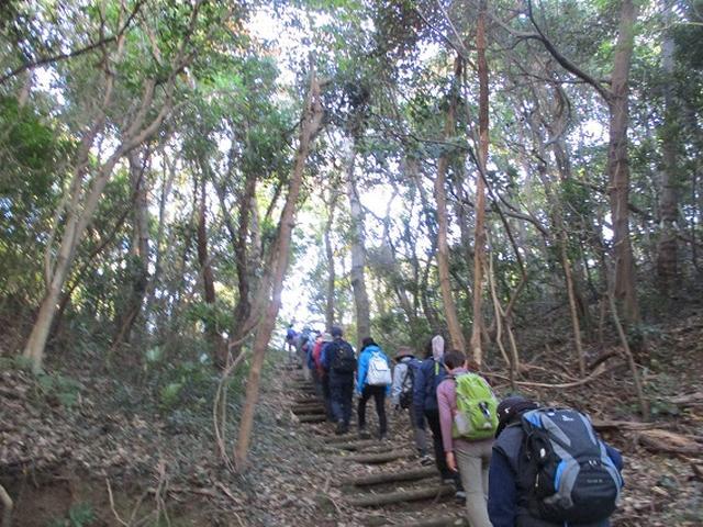 画像15: 12月27日に岡田ガイドのコースで山旅会ハイキング 「須崎遊歩道」 にいってまいりました!