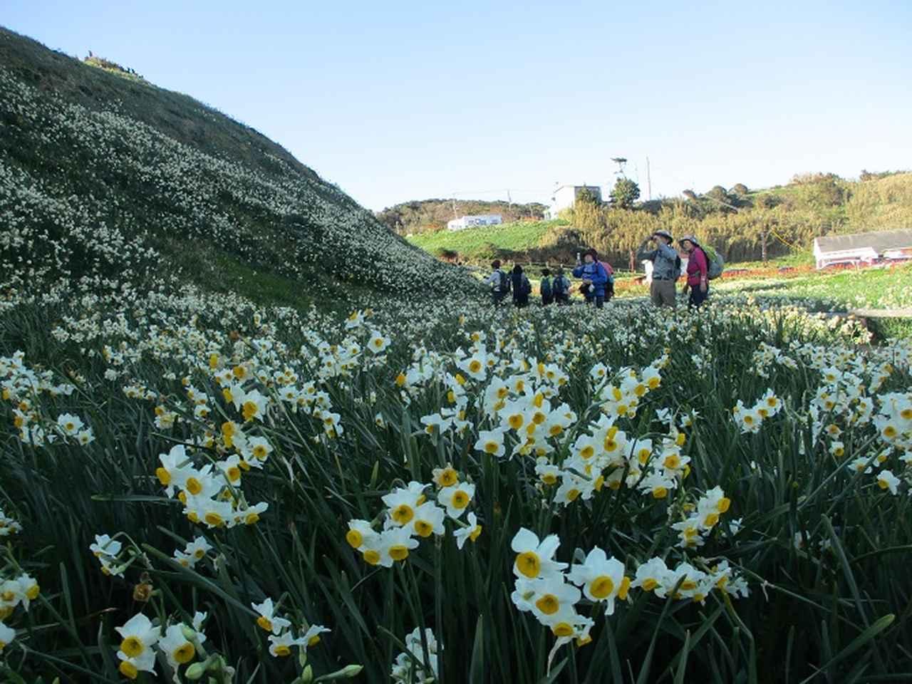 画像13: 12月27日に岡田ガイドのコースで山旅会ハイキング 「須崎遊歩道」 にいってまいりました!