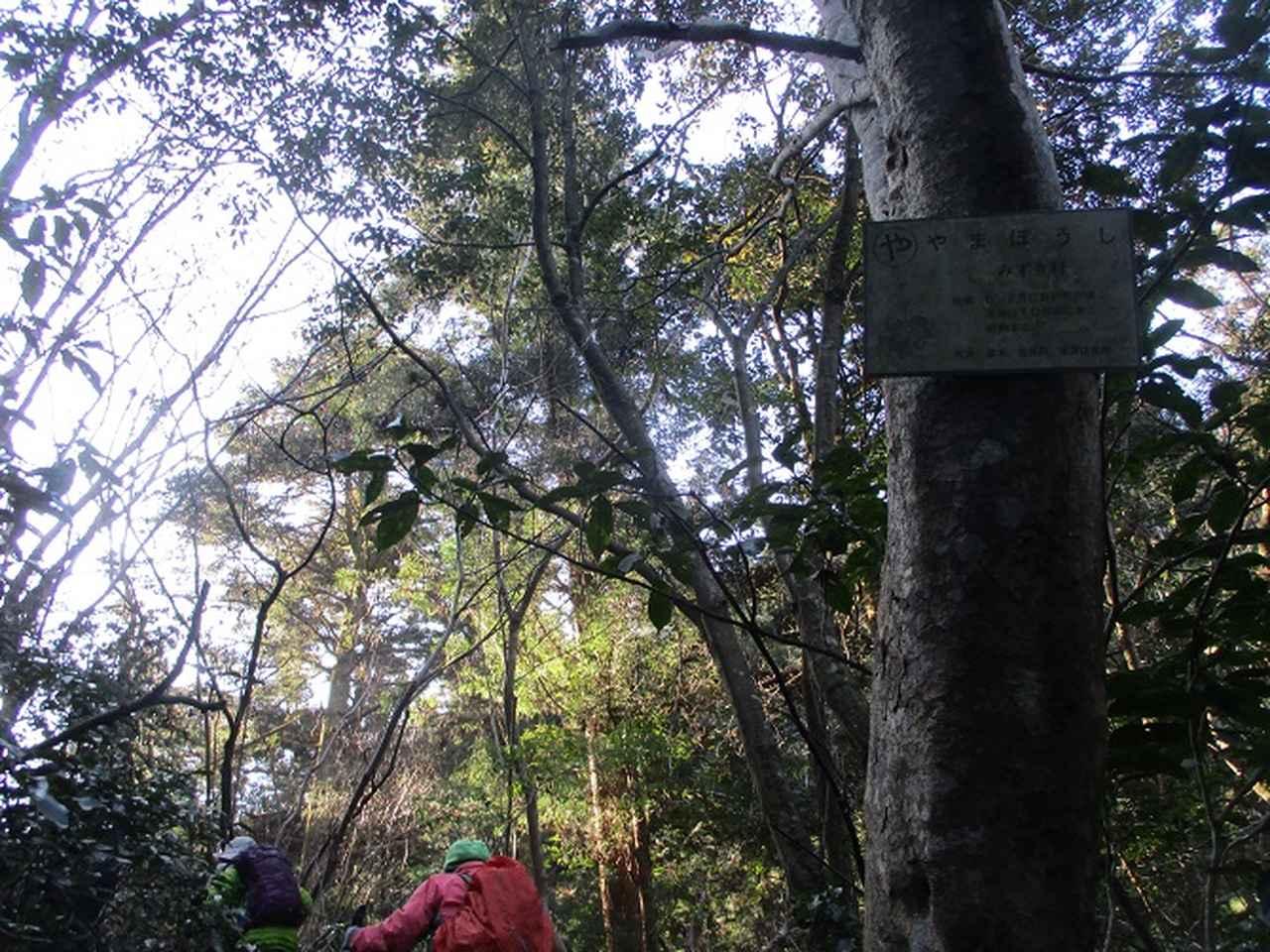 画像2: 先日12月21日に岡田ガイドのコースで 「高尾山」 へ行ってきました!