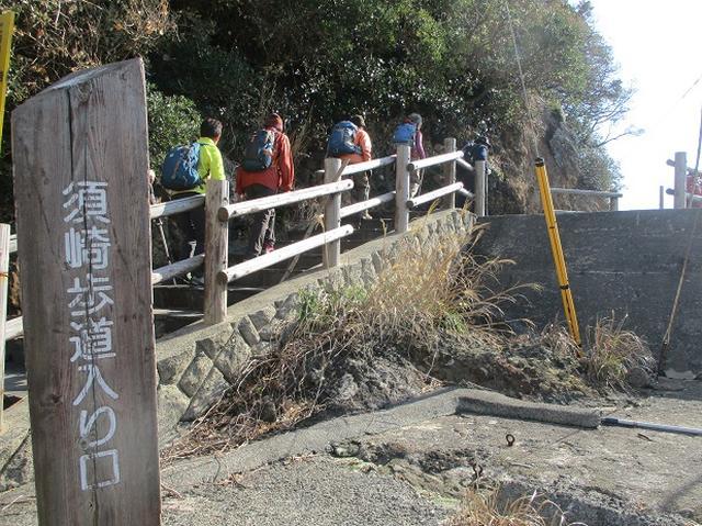 画像2: 12月27日に岡田ガイドのコースで山旅会ハイキング 「須崎遊歩道」 にいってまいりました!