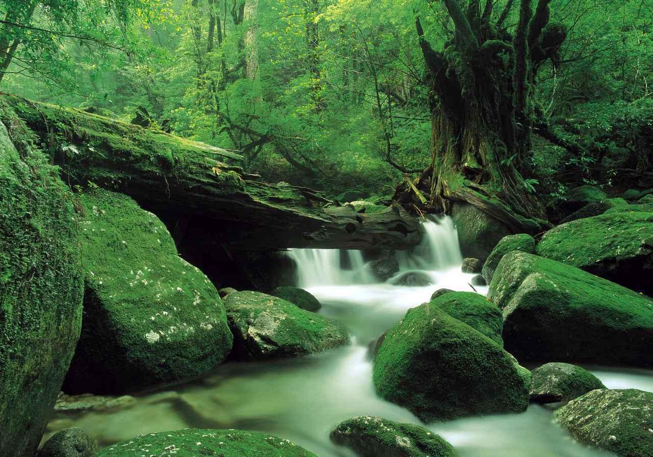 画像: 白谷雲水峡