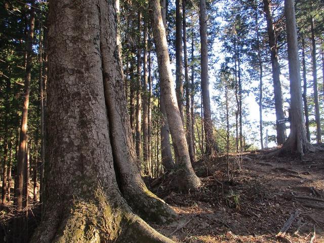 画像3: 1月の山旅会 「丹沢南山」 の下見にいってまいりました!