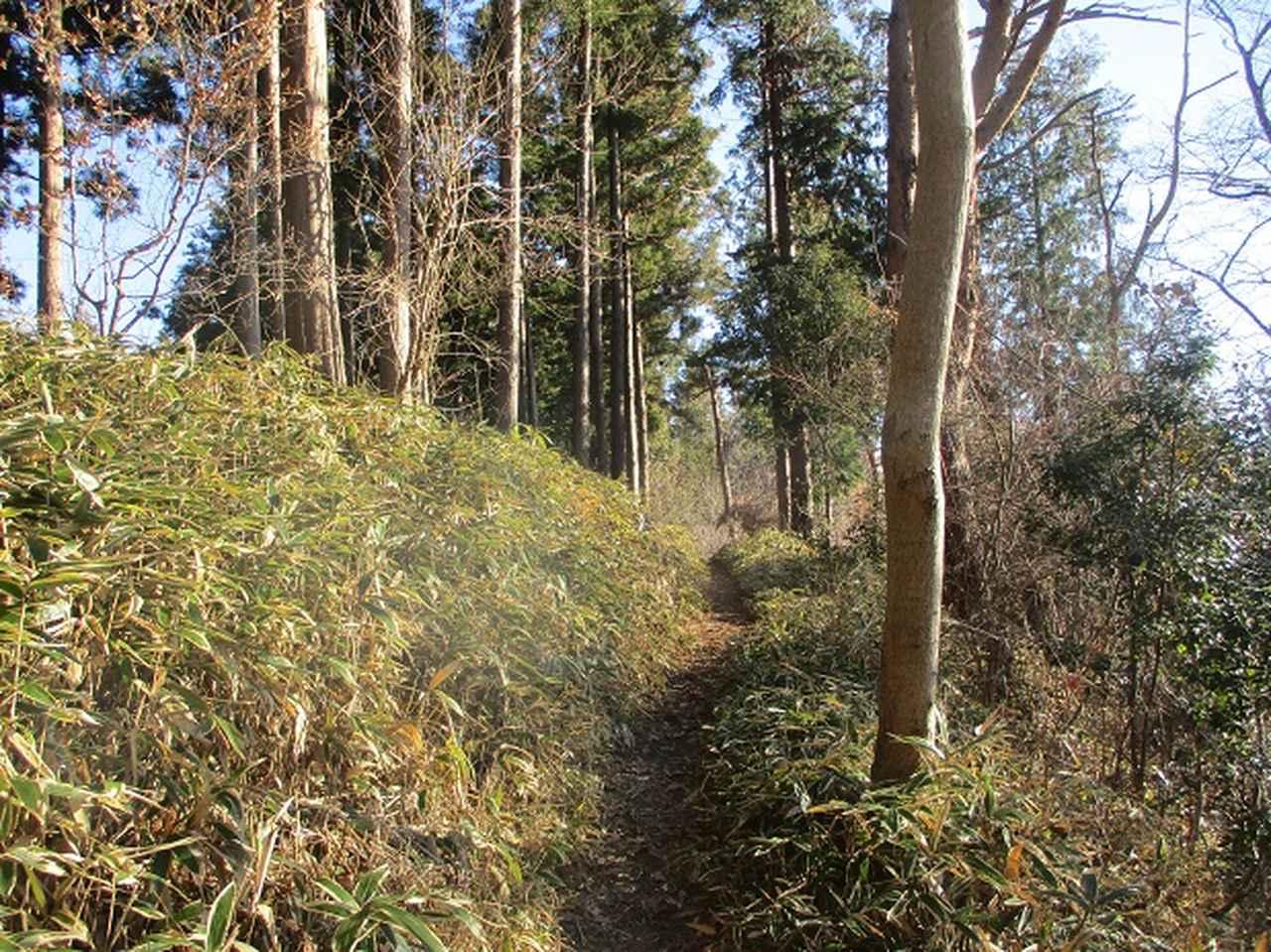 画像6: 1月の山旅会 「丹沢南山」 の下見にいってまいりました!