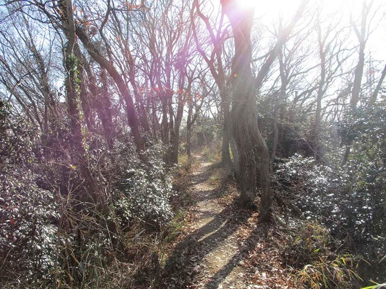 画像6: 先日1月7日に山旅会現地集合 「聖峰から高取山」 ツアーにいってまいりました!