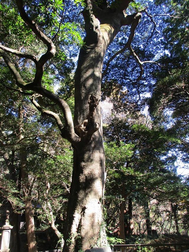 画像3: 1月の山旅会現地集合 「鷹取山から浜見台」 ツアーの下見にいってまいりました!