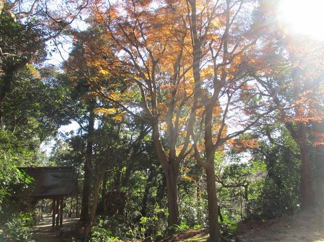 画像1: 1月の山旅会現地集合 「鷹取山から浜見台」 ツアーの下見にいってまいりました!