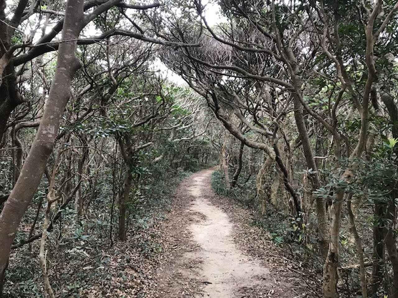 画像: 木々に覆われたハイキング道を進みます。そこを抜けた先には・・・。