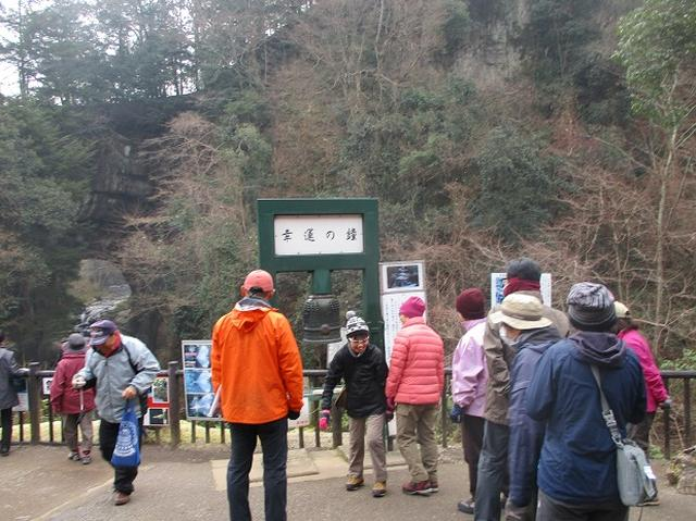 画像2: 新年1本目は房総の 「とみやま水仙遊歩道」 へ1月15日に 行って来ました♪
