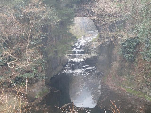画像3: 新年1本目は房総の 「とみやま水仙遊歩道」 へ1月15日に 行って来ました♪