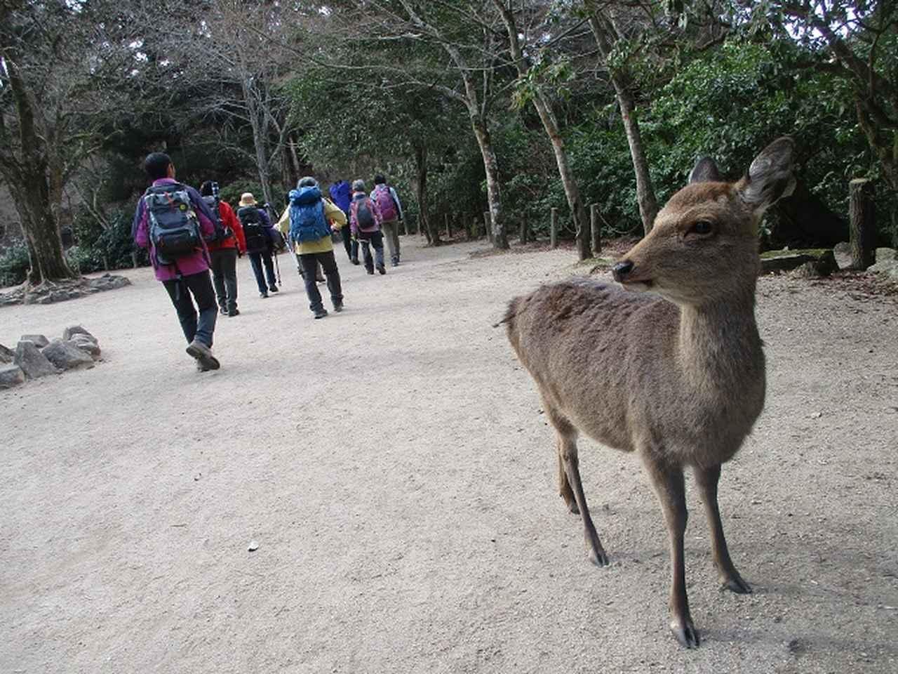 画像1: 【山旅会・登山ガイドこだわりツアー】岡田ガイドからの便り・山旅会ツアー3月までの催行状況