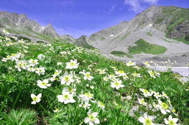 画像: 北アルプス・涸沢カールのお花畑 穂高連峰に抱かれた、アルプスならではの絶景です。