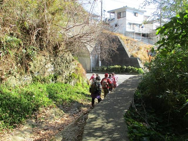 画像10: 【山旅会・登山ガイドこだわりツアー】添乗員からの便り・鷹取山から浜見台ツアーにいってまいりました!