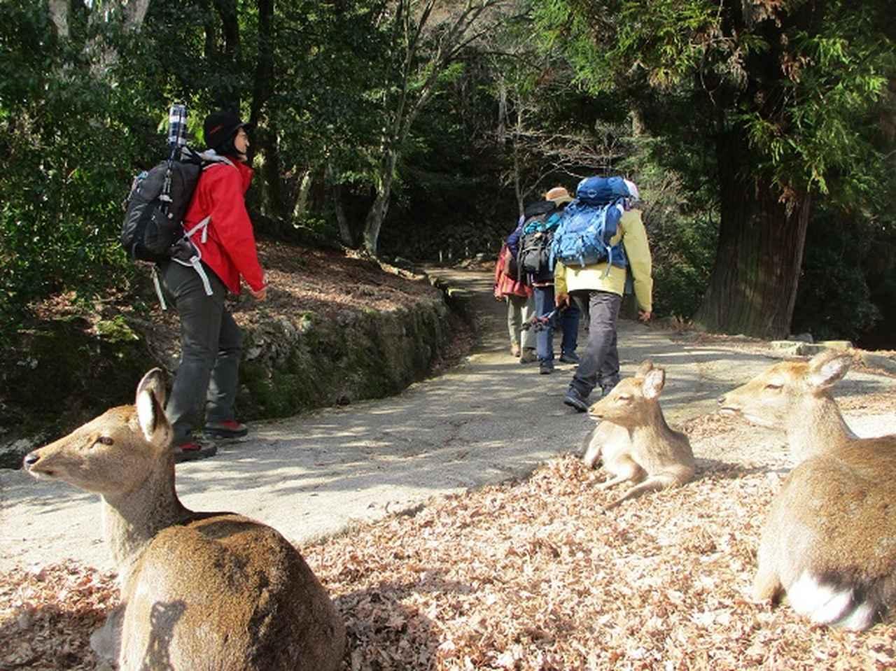 画像5: 【山旅会・登山ガイドこだわりツアー】添乗員からの便り・広島県と山口県のツアーにいってまいりました!(その1)