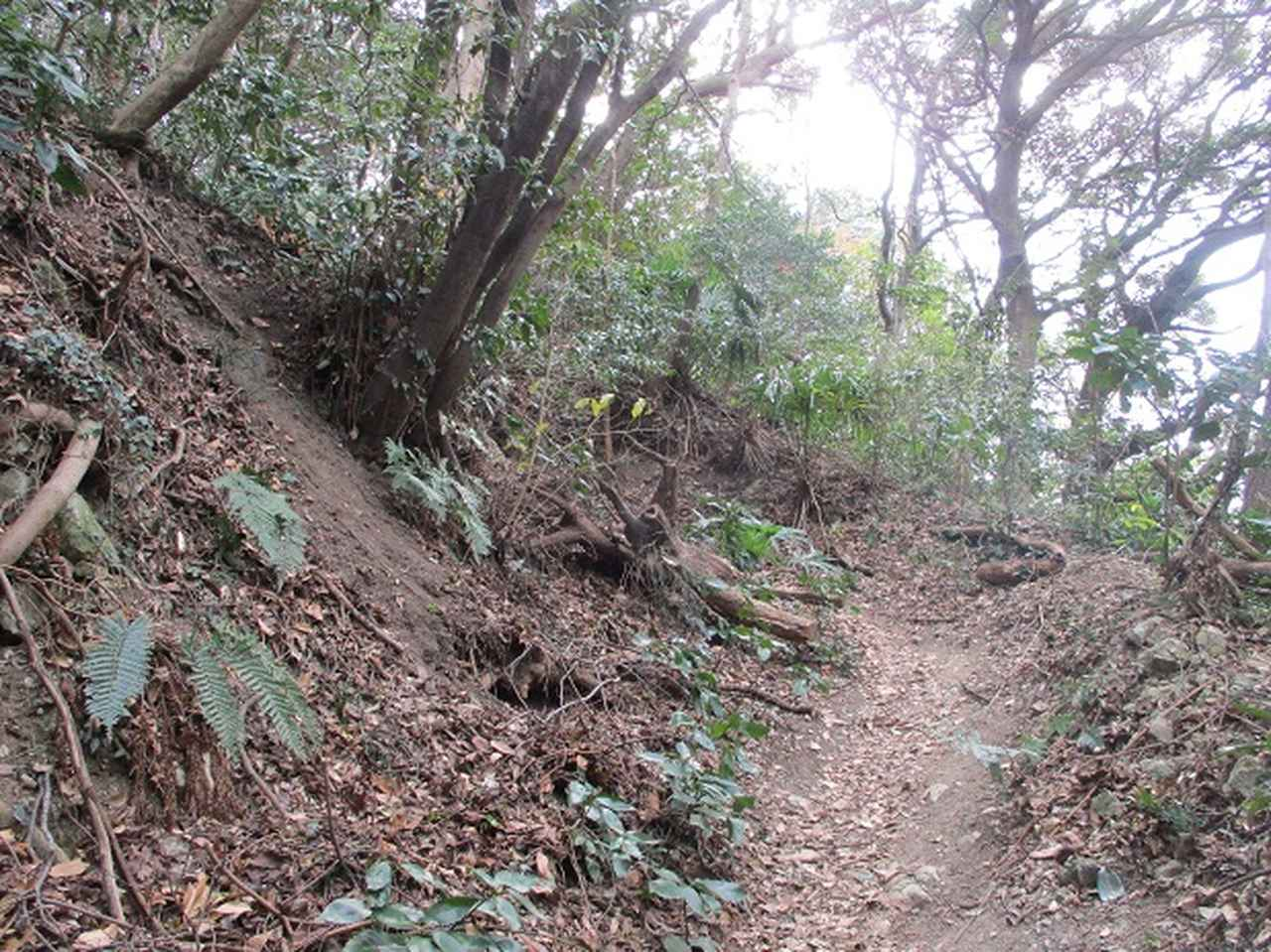 画像3: 【山旅会・登山ガイドこだわりツアー】添乗員からの便り・阿部倉山から二子山ツアーの下見にいってまいりました!