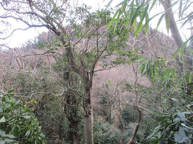画像8: 【山旅会・登山ガイドこだわりツアー】添乗員からの便り・阿部倉山から二子山ツアーの下見にいってまいりました!