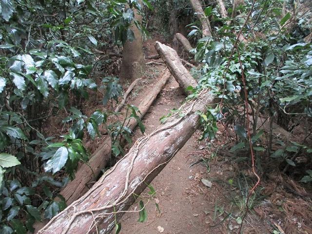 画像6: 【山旅会・登山ガイドこだわりツアー】添乗員からの便り・阿部倉山から二子山ツアーの下見にいってまいりました!