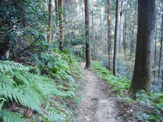 画像11: 【山旅会・登山ガイドこだわりツアー】添乗員からの便り・阿部倉山から二子山ツアーの下見にいってまいりました!