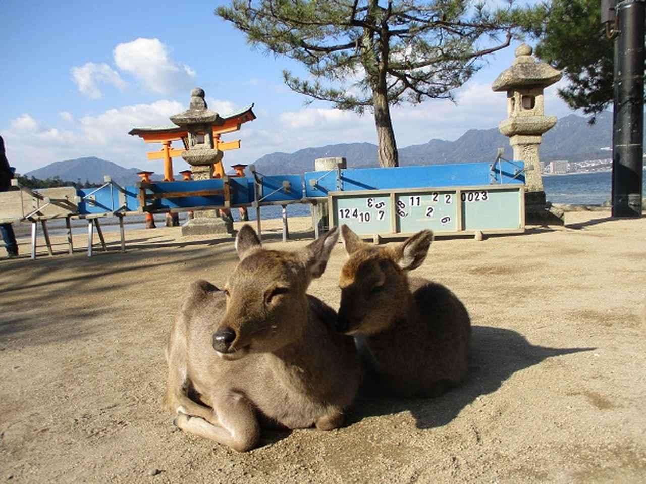 画像2: 【山旅会・登山ガイドこだわりツアー】添乗員からの便り・広島県と山口県のツアーにいってまいりました!(その1)