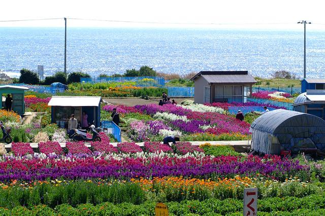 画像: お花畑や風光明媚な海岸線(イメージ)