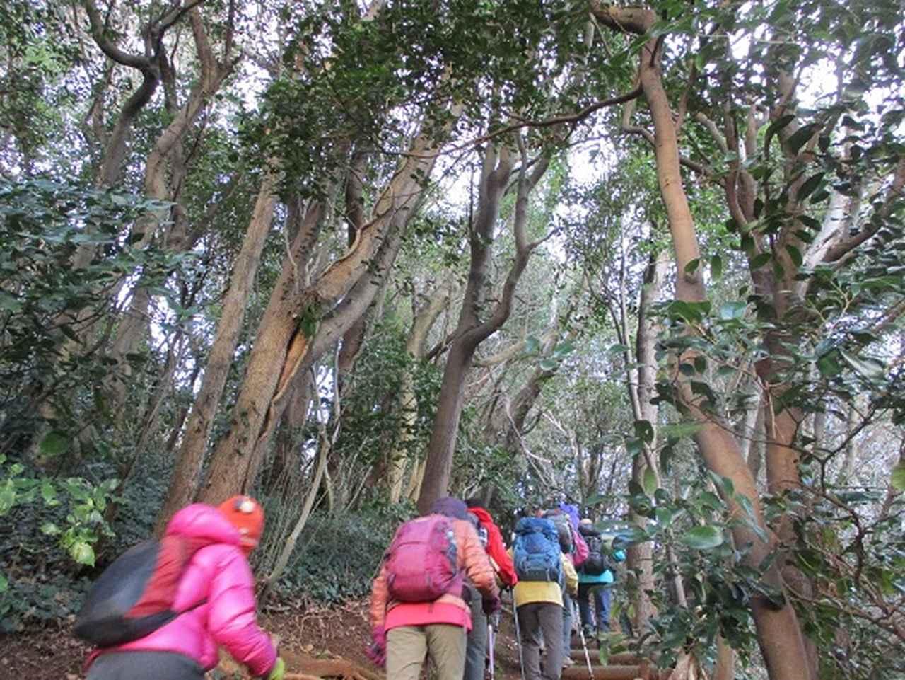 画像6: 【山旅会・登山ガイドこだわりツアー】添乗員からの便り・広島県と山口県のツアーにいってまいりました!(その3)