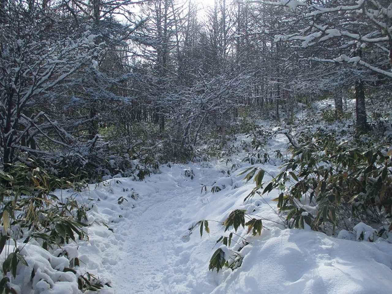 画像3: 【山旅会・登山ガイドこだわりツアー】岡田ガイドからの便り・山旅会ツアー3月までの催行状況